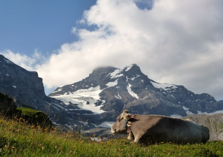 Alpsommer auf Chammli
